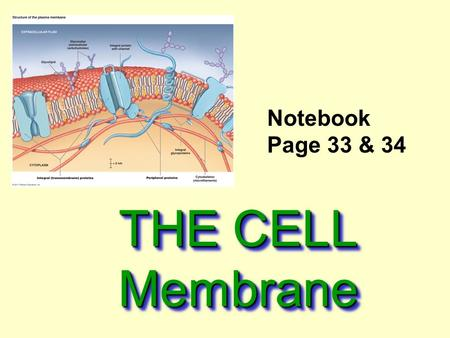 THE CELL Membrane Notebook Page 33 & 34. Cell Membrane Also called the Plasma Membrane.