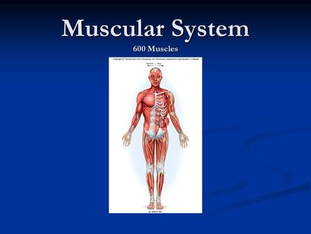 Muscular System 600 Muscles. OBJECTIVES Key Objective Describe the structure of the muscle Be able to describe movement and maintenance of posture in.