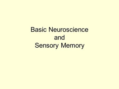Basic Neuroscience and Sensory Memory. Basic Neuroanatomy Subcortical Structures –Hippocampal Region Components –Hippocampus Proper –Dentate Gyrus –Subiculum.