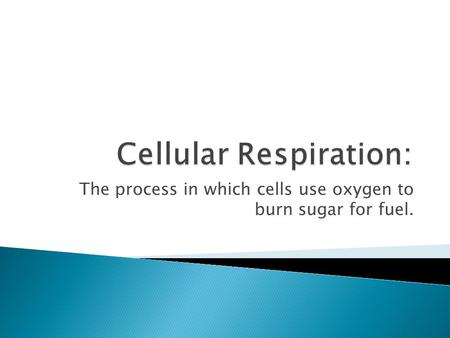 The process in which cells use oxygen to burn sugar for fuel.