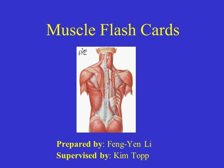Muscle Flash Cards Prepared by: Feng-Yen Li Supervised by: Kim Topp.