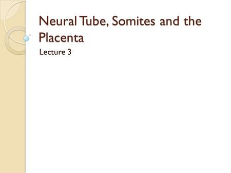 Neural Tube, Somites and the Placenta