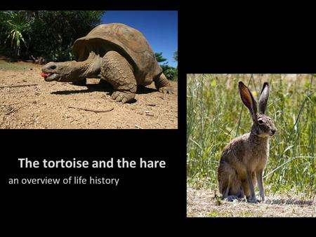 The tortoise and the hare an overview of life history.