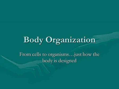 Body Organization From cells to organisms…just how the body is designed.