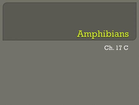 "Ch. 17 C. amphibian  ""amphibian"" comes from a Greek word meaning ""double life"" Many amphibians start their lives in water and end up on land  Amphibians."