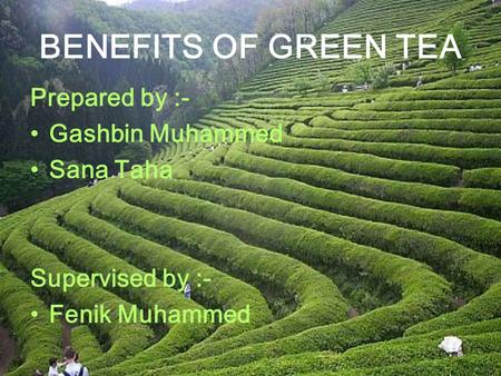 BENEFITS OF GREEN TEA Prepared by :- Gashbin Muhammed Sana Taha Supervised by :- Fenik Muhammed.