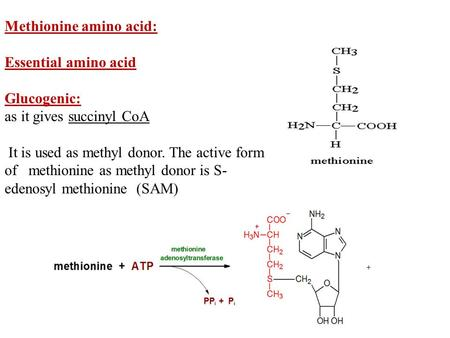 Methionine amino acid: Essential amino acid Glucogenic: as it gives succinyl CoA It is used as methyl donor. The active form of methionine as methyl donor.