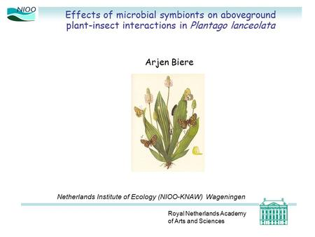 Effects of microbial symbionts on aboveground plant-insect interactions in Plantago lanceolata Royal Netherlands Academy of Arts and Sciences Arjen Biere.