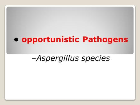 Opportunistic Pathogens –Aspergillus species. Aspergillosis is an infection caused by Aspergillus, a common mold that lives indoors and outdoors. Most.