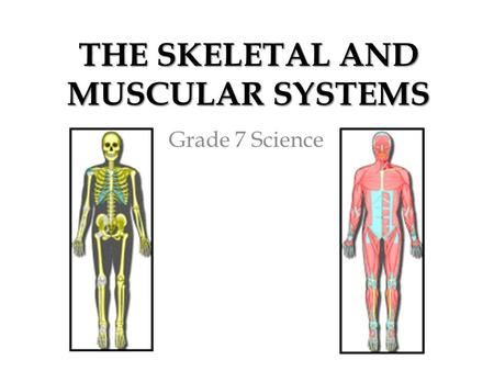 THE SKELETAL AND MUSCULAR SYSTEMS Grade 7 Science.