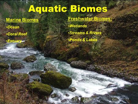 the characteristics of the streams lakes ponds and swamps types of freshwater biomes