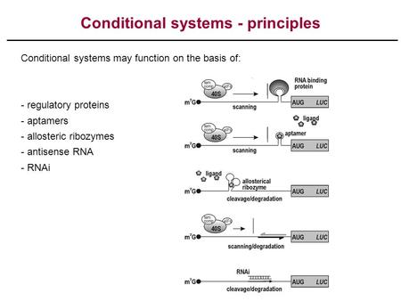 Conditional systems - principles Conditional systems may function on the basis of: - regulatory proteins - aptamers - allosteric ribozymes - antisense.
