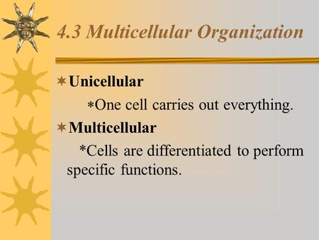 4.3 Multicellular Organization  Unicellular  One cell carries out everything.  Multicellular *Cells are differentiated to perform specific.