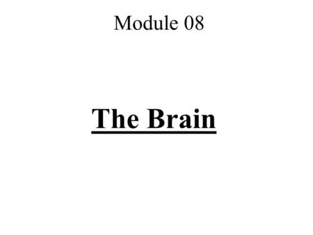 The Brain Module 08. I. Lower-Level Structures Brainstem, Thalamus, and Cerebellum.