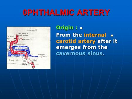 0PHTHALMIC ARTERY Origin : Origin : From the internal carotid artery after it emerges from the cavernous sinus. From the internal carotid artery after.