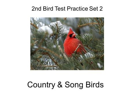 Country & Song Birds 2nd Bird Test Practice Set 2.