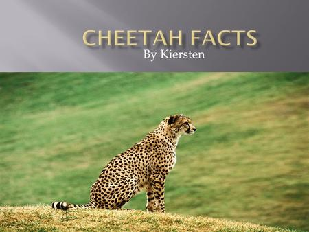 By Kiersten. A cheetah is a mammal. It's name comes from a Hindi word meaning ''spotted one''. They can live up to 10-12 years old.