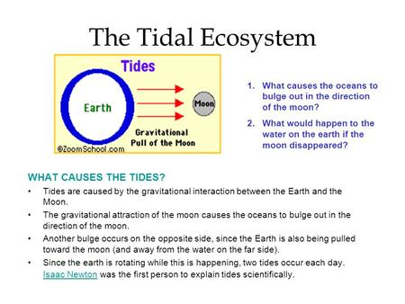 The Tidal Ecosystem WHAT CAUSES THE TIDES? Tides are caused by the gravitational interaction between the Earth and the Moon. The gravitational attraction.