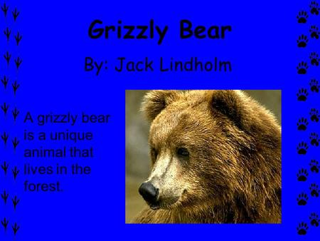 Grizzly Bear By: Jack Lindholm A grizzly bear is a unique animal that lives in the forest.