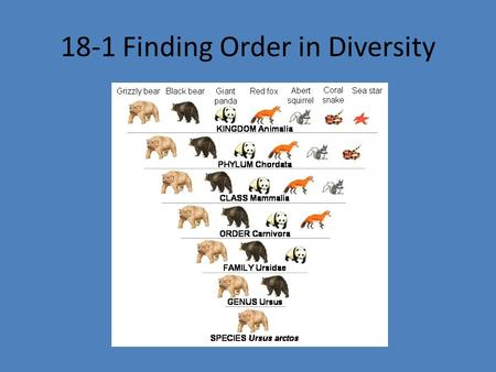 18-1 Finding Order in Diversity. To study the diversity of life, biologists use a system of classification to logically name and group organisms based.