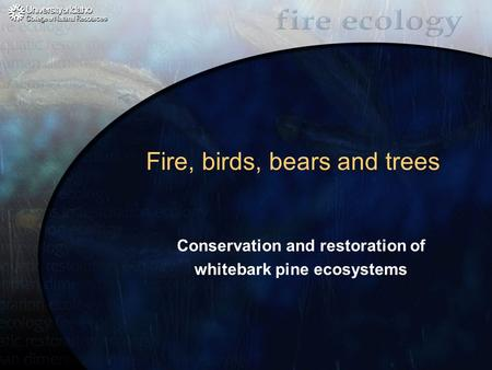 Fire, birds, bears and trees Conservation and restoration of whitebark pine ecosystems.