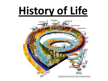 History of Life Chapter 14. Biogenesis Biogenesis is the idea that all living things come from other living things. Before the 17 th century it was believed.