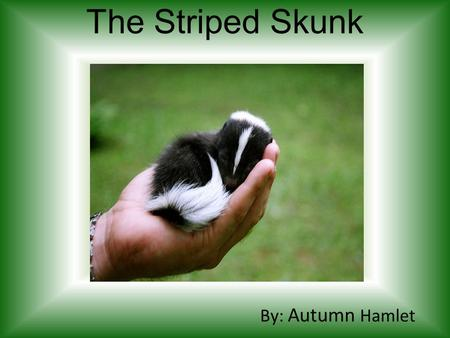 The Striped Skunk By: Autumn Hamlet. General Information It is a mammal. It's Scientific Name is Mephitis mephitis. It can live up to 13 years, 6 years.
