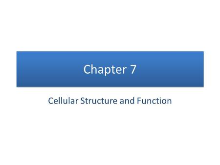 Chapter 7 Cellular Structure and Function. CELLS!