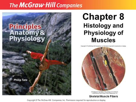 Histology and Physiology of Muscles