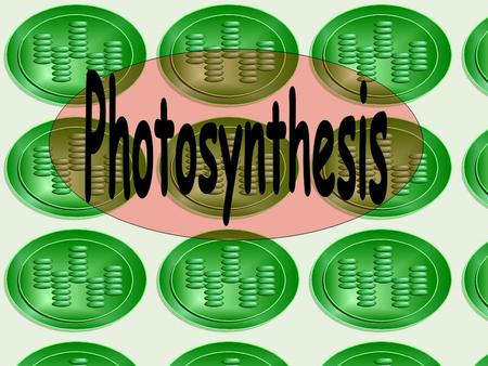 Photosynthesis is the process by which plants use sunlight, carbon dioxide and water to produce high energy carbohydrates such as sugars and starches.