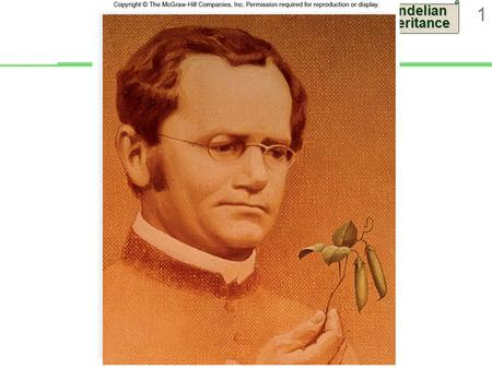 Mendelian Inheritance 1. 2 Gregor Mendel Austrian monk  Studied science and mathematics at University of Vienna  Conducted breeding experiments with.