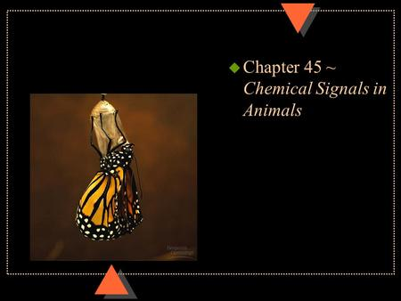 U Chapter 45 ~ Chemical Signals in Animals. Regulatory systems u Hormone~ chemical signal secreted into body fluids (blood) communicating regulatory messages.