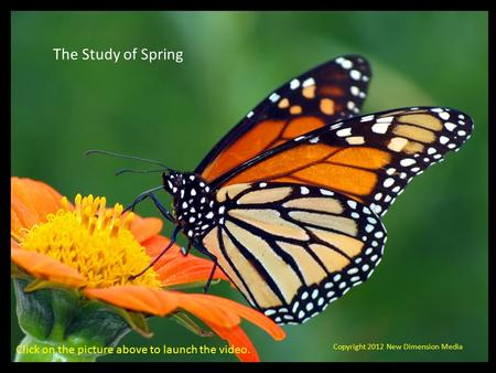 The Study of Spring Copyright 2012 New Dimension Media Click on the picture above to launch the video.