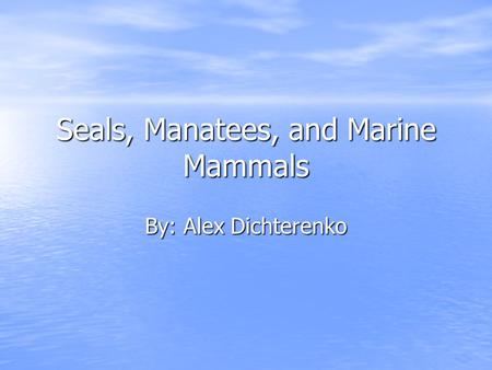 Seals, Manatees, and Marine Mammals By: Alex Dichterenko.