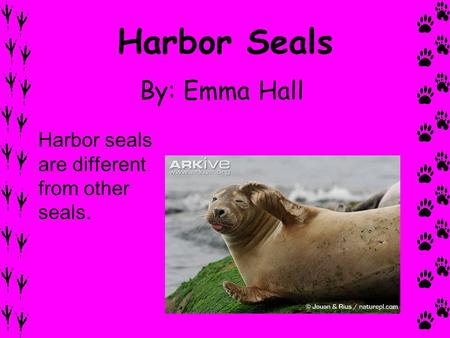 Harbor Seals By: Emma Hall Harbor seals are different from other seals.