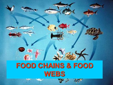 FOOD CHAINS & FOOD WEBS. FOOD CHAINS vs. FOOD WEBS FOOD CHAIN – Diagram that shows how energy flows from 1 organism to another in an ecosystem. FOOD WEB.