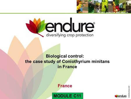 © ENDURE, February 2007 FOOD QUALITY AND SAFETY © ENDURE, February 2007 FOOD QUALITY AND SAFETY Biological control: the case study of Coniothyrium minitans.