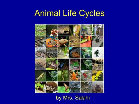 Animal Life Cycles by Mrs. Salahi. When Animals Reproduce they make more living things of the same kind.
