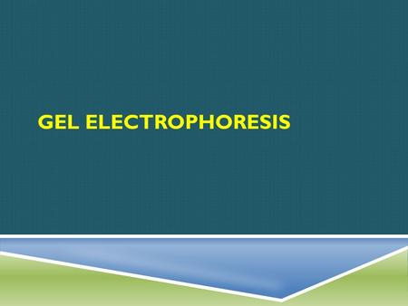 GEL ELECTROPHORESIS. FIRST, WHAT……  Simply put, gel electrophoresis is a technique used to separate molecules such a DNA, RNA and proteins according.