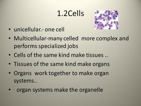 1.2Cells unicellular.- one cell Multicellular-many celled more complex and performs specialized jobs Cells of the same kind make tissues.. Tissues of the.