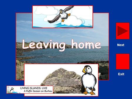 Exit Next. Burhou is home in the summer to 175 pairs of Atlantic Puffins. Next.