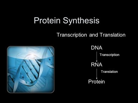 Protein Synthesis Transcription and Translation DNA Transcription RNA Translation Protein.