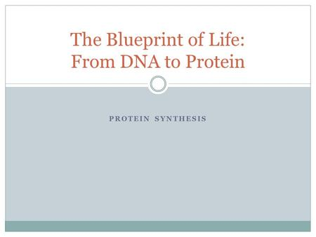 PROTEIN SYNTHESIS The Blueprint of Life: From DNA to Protein.