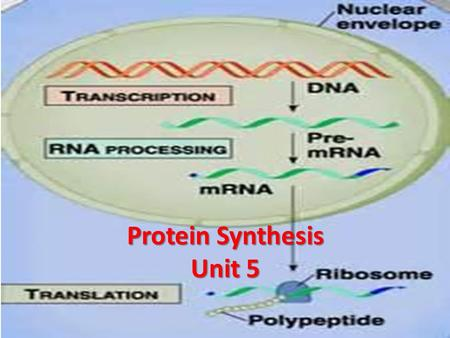 Protein Synthesis Unit 5. Protein Synthesis DNA  RNA  Proteins 4 Steps: 1)Transcription  information is DNA is copied to RNA (nucleic acid  nucleic.
