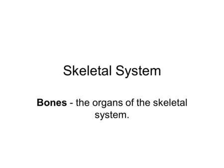 Skeletal System Bones - the organs of the skeletal system.