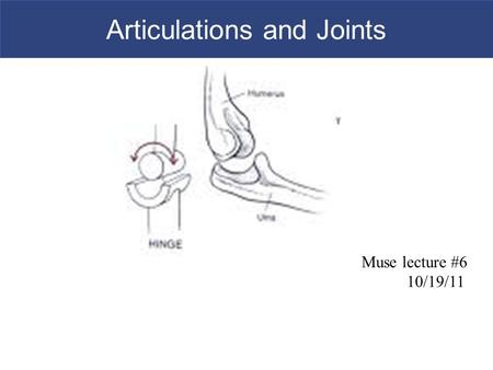 Articulations and Joints Muse lecture #6 10/19/11.