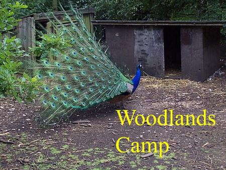 Woodlands Camp. Where is Woodlands Camp? Near Streetly Crematorium, north west of Birmingham. About 6 miles from school! Drive to the end of Bourne Vale,