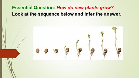 Essential Question: How do new plants grow? Look at the sequence below and infer the answer.
