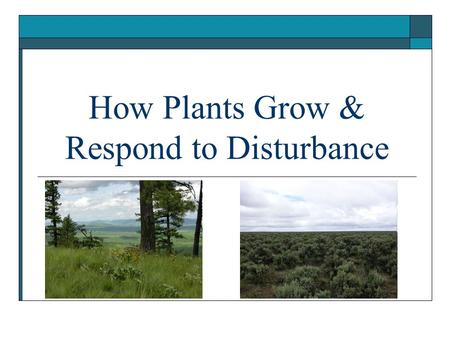 How Plants Grow & Respond to Disturbance. Succession & Disturbance  Community change is driven by successional forces: Immigration and establishment.