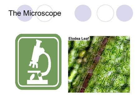 The Microscope. There are 2 types of microscopes: 1. Simple- contains one lens 2. Compound- contains 2 or more lenses.